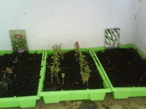 Метод Миттлайдера: посев семян
