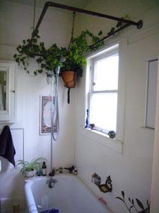 Комнатные растения винтерьере ванной комнаты