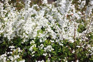 Французский регулярный стиль сада: подбор растений