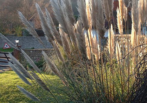 Подбор водных растений чтобы пруда