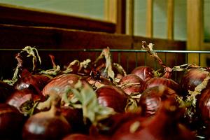 Выращиваем батун-лук нагрядках