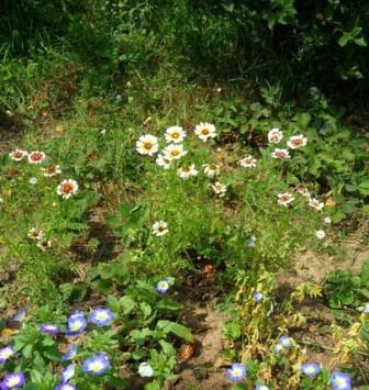 Советы огородникам. Июнь