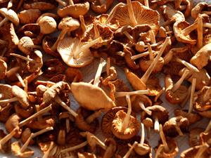 Технология выращивания грибов наприусадебном участке