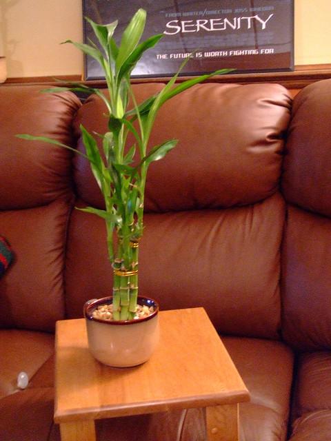 Комнатные растения насчастье
