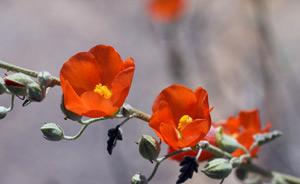 Солитерные посадки цветочных растений