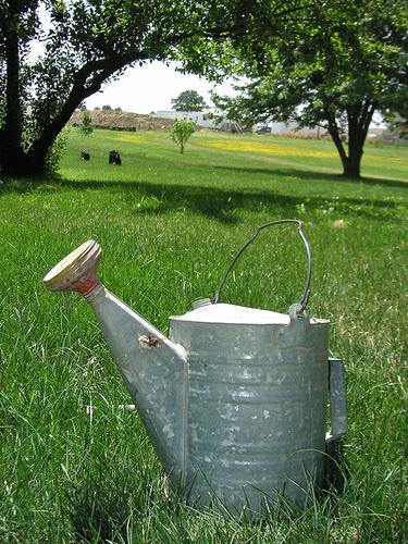 Секреты качественного полива  сада