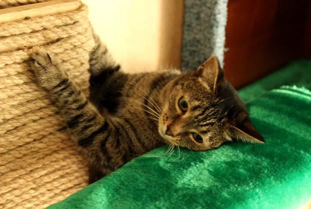 Домики для кошек «Башенки» скреплением кстене своими руками