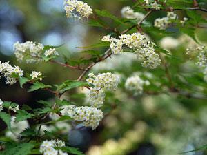 Подбор растений для сада витальянском стиле