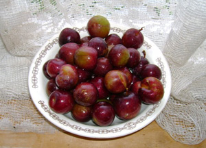 Как вырастить сливово-вишневый гибрид