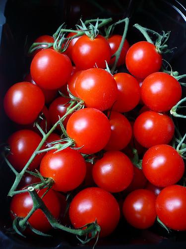 Как вырастить наподоконнике томаты