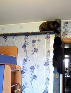 Мебель ради кошек своими руками