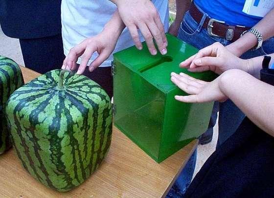 Как вырастить фрукт ввиде куба