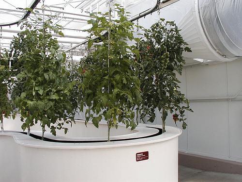 Создание гидропонного сада
