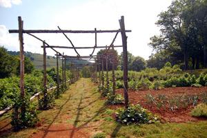Применение органических удобрений