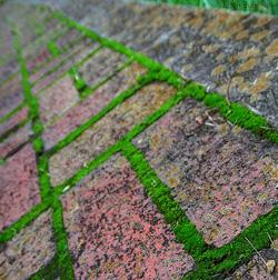 Травяные исмешанные дорожки научастке