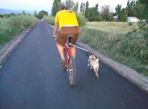 Собачий ремень дабы прогулок навелосипеде