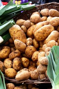 Выращивание раннего картофеля