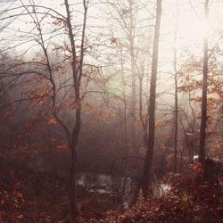 Участок влесу— советы дендролога