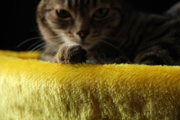Зачем кошке дом, иль знаетли дрек свое место
