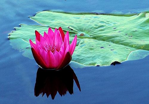 Выращивание водных растений ради пруда