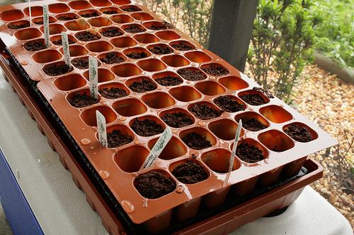 Выращивание огурцов вгрунте