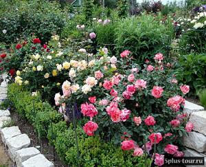 Ландшафтный дизайн: тем аль иным способом избежать ошибок при  проектировании сада иреализации проекта