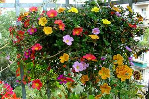 Остекление балконов: создаем здоровый садик  свидом нагород