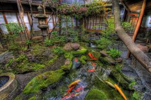 «Рыбная ферма» всобственном саду