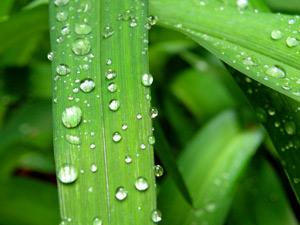 Погода, приметы икалендарь огородника с3по9июня 2010