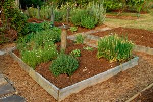 «Вредные» советы огородникам исадоводам