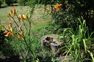 Идеи вашего сада: рутарий