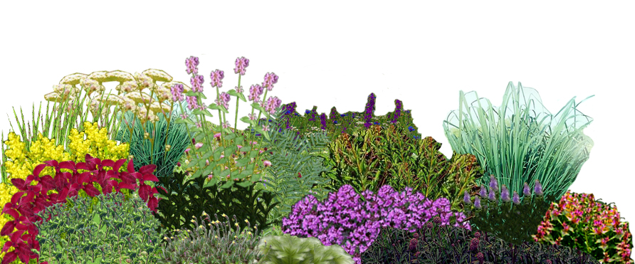 Сад трав. Лекарственные растения всаду